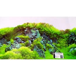 Аквариумный фон высотой 60см. Стоимость за 1 метр фона