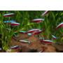 Маленькие рыбки (34)