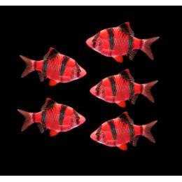 Барбус ГЛО светящийся красный (рубин) 1см